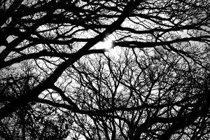Trees-silouette